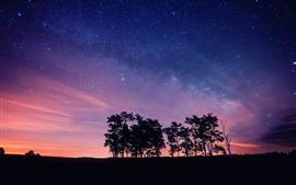 Céu roxo noite, estrelas, árvores, silhuetas