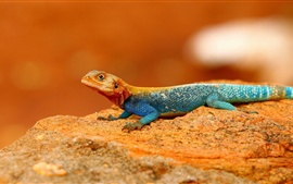 Preview wallpaper Rainbow Lizard