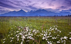 Preview wallpaper Slovakia, Tatra Mountains, grass, flowers
