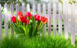 Preview wallpaper Spring flowers, red tulips, garden, grass