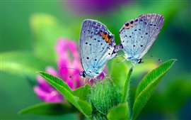 Spring nature, butterfly, green leaves, flower