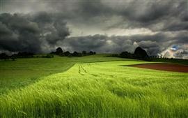 Campos verdes de verano, cielo nublado