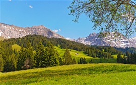 Preview wallpaper Switzerland landscape, mountains, prairie, forest, trees