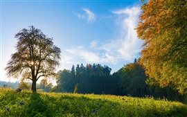 Preview wallpaper Switzerland morning scenery, trees, meadow, blue sky
