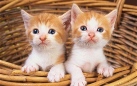Preview wallpaper Two cute kittens in basket