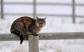 Cat in winter, snow, fence
