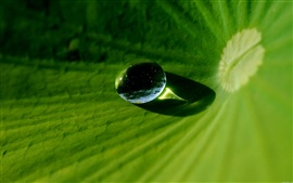 Preview wallpaper Macro dew on lotus leaf