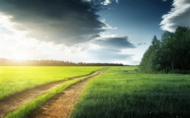 Nature scenery, fields, grass, trees, clouds, road