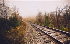 Railroad, fog, trees