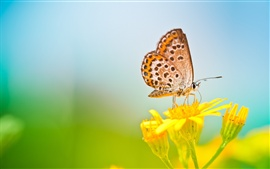 Spring butterfly, yellow flower, blurred background