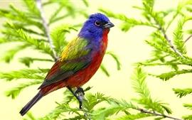Aves loro primavera, ramas, hojas