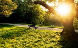 Summer morning in the park, bench, trees, grass, sunlight