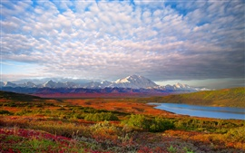 USA nature landscape, Denali National Park