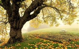 壁紙のプレビュー 秋の公園の風景、木、霧が、葉