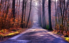Preview wallpaper Autumn road, trees, fog, sun