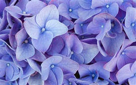 Preview wallpaper Blue four petals flowers