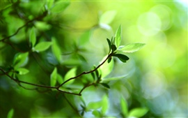 Preview wallpaper Bokeh green leaves spring