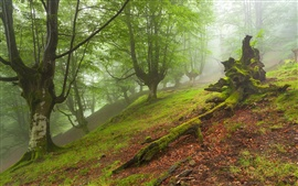 Preview wallpaper Forest landscape, trees, fog