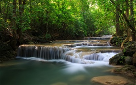 Forest trees, waterfalls, river, green nature