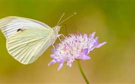 Preview wallpaper Little butterfly with flower