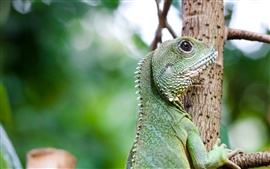 Preview wallpaper Lizard climb tree