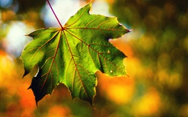 Preview wallpaper Macro maple leaf, bokeh, fall
