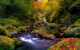 Preview wallpaper Nature, autumn forest, river, rocks, moss, leaves