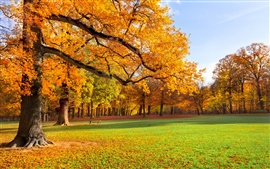 Preview wallpaper Nature landscape, autumn, park, trees, grass, sunshine