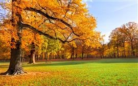 Nature landscape, autumn, park, trees, grass, sunshine