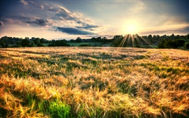 Preview wallpaper Nature landscape, fields, sun rays