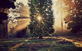 Preview wallpaper Nature landscape, trees, sun rays, sunset