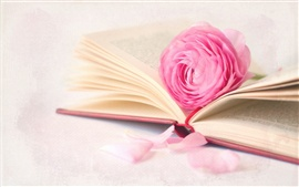 Pink rose flower with book