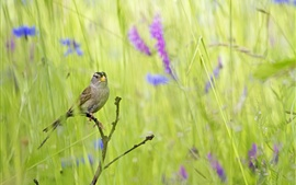 Preview wallpaper Summer bird in the grass