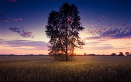 Preview wallpaper Sunset scenery, lonely tree, wheat field