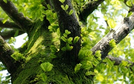 Tree trunk, leaves, moss