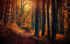 Preview wallpaper Autumn forest trees, leaves, yellow orange, path, nature scenery