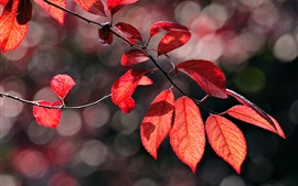 Preview wallpaper Autumn red leaves, twig, sunlight