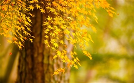 Preview wallpaper Autumn tree yellow leaves, nature scenery