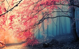 Preview wallpaper Beautiful autumn tree red leaves in the forest