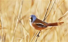 Pássaro, grama vara, verão