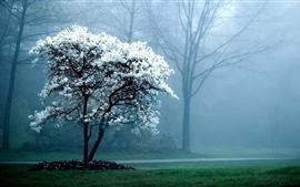 Árbol floreciente, flores blancas, bosque