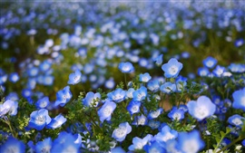 Preview wallpaper Blue flowers, bokeh