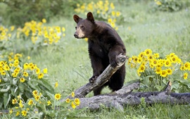 Brown bear, withered tree, yellow flowers