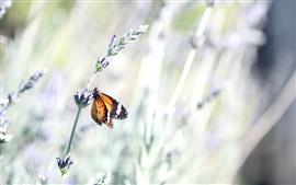 Aperçu fond d'écran Papillon, fleur sauvage, la lumière vive