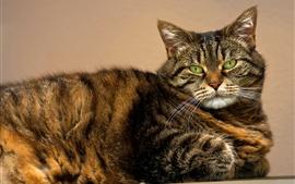 Vista lateral del gato, ojos verdes