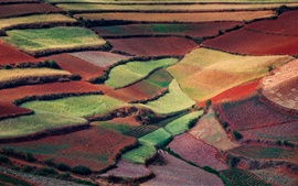 China spring nature, countryside fields, like colorful carpets