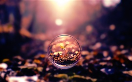 Creative pictures, bubbles, leaves, nature plants