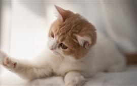Gato curioso cute