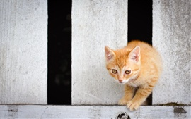 Preview wallpaper Cute kitten cross the fence