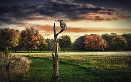 Preview wallpaper Design collage pictures, trees, dry, owl, red sky